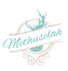 Methuselah Bar & Lounge